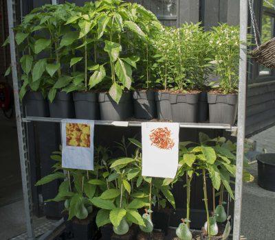 Planten verkoop